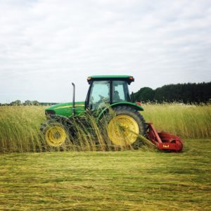 roller-crimping a cereal rye/crimson clover cover crop mulch