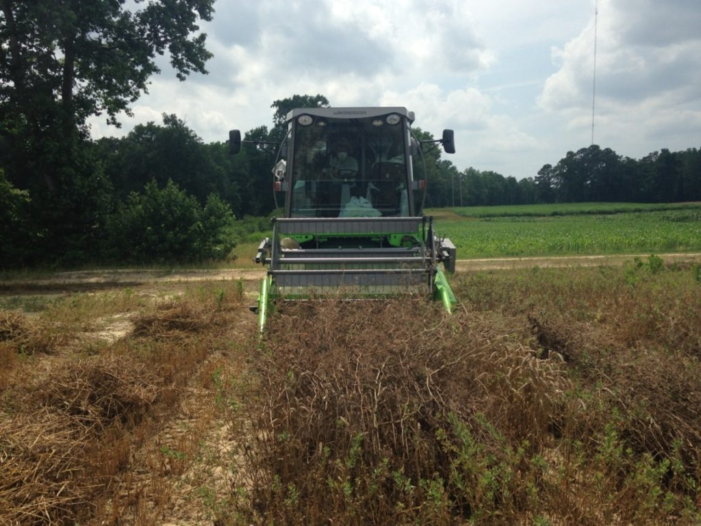 Harvesting winter pea and wheat simultaneously using the soybean sieve in our combine